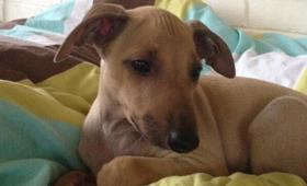 Milton_puppy